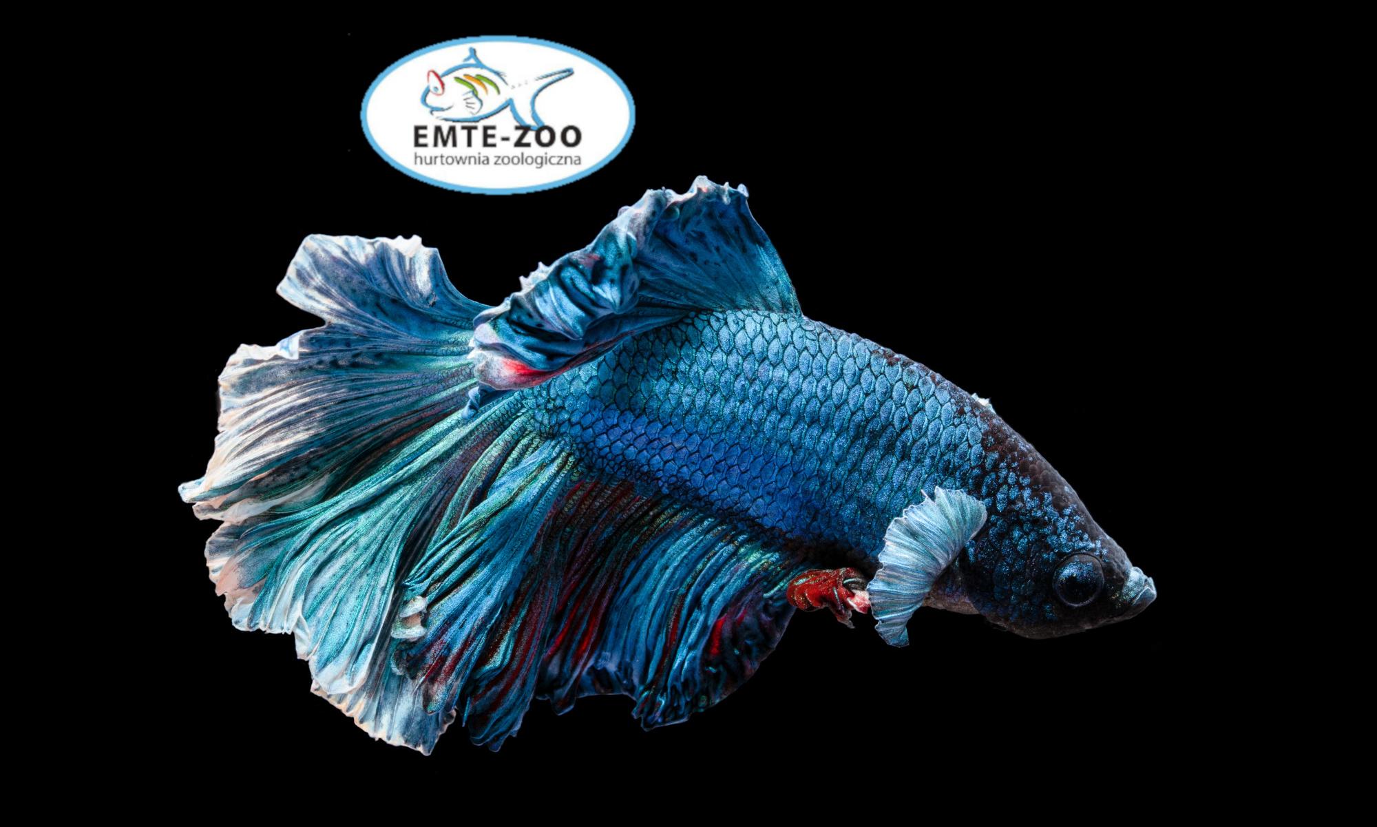 EMTE - Zoo